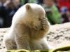 Polar-Bear-Cute-Photo.png